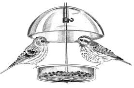 Birds On Feeder